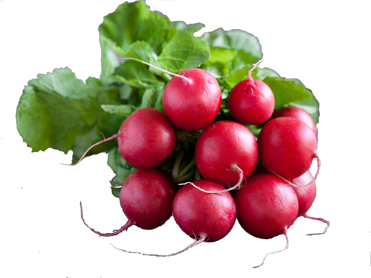 20150519-hey-chef-radishes-shutterstock