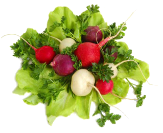 multicolored_radishes_trans